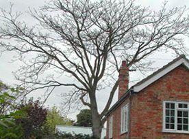 tree causing damage to home