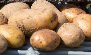 potato suppliers