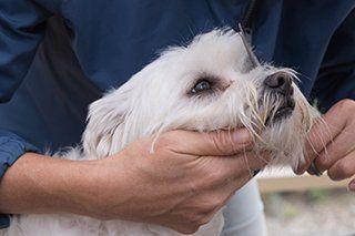 Dog Grooming Pensacola, FL