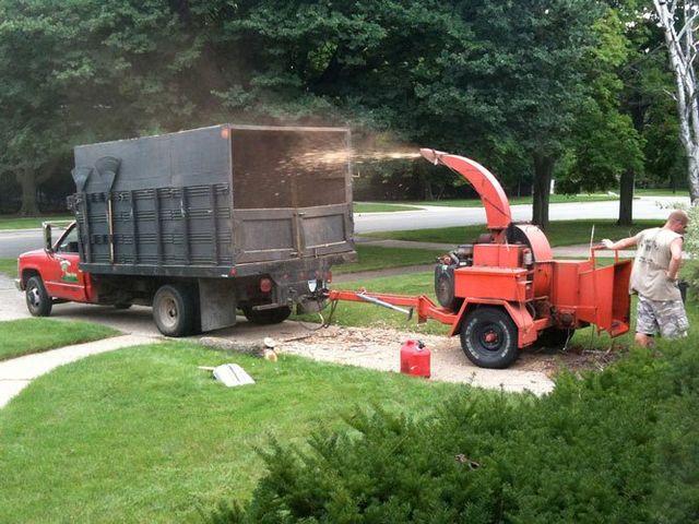 man mulching tree