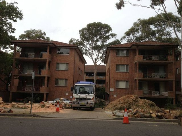 tree removal by apartment buildings