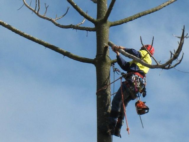man in tree cutting branches