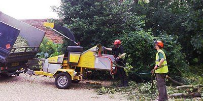 unwanted tree removal