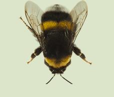 Eliminazione vespe e calabroni