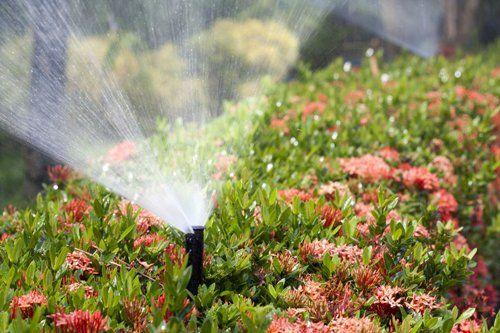 Lawn sprinkler system for crops