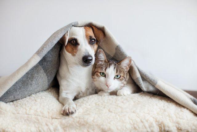Animali Domestici In Vendita Casoria Na Dalla A Alla Zampa