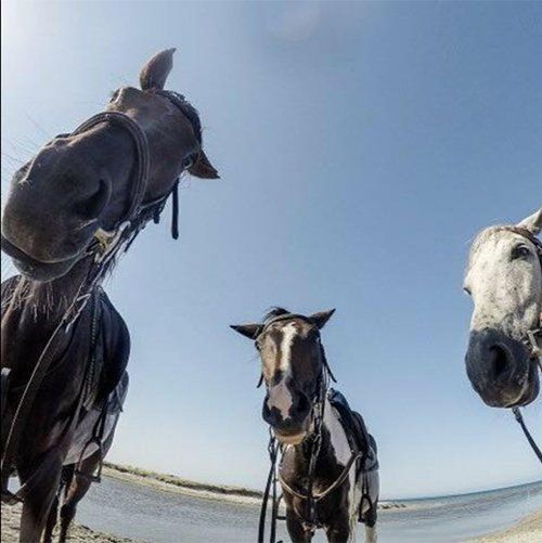 tre cavalli su sfondo cielo