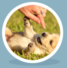 PUPPY AND BEGINNER TRAINING CLASSES