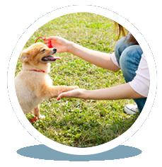 ONE-TO-ONE DOG TRAINING
