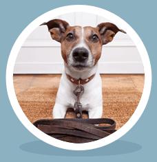 ADVANCED DOG TRAINING