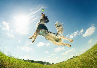 Cane che salta per giocare con una palla - Figaro ad Avellino