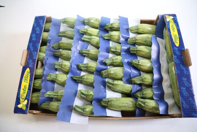 Zucchina striata