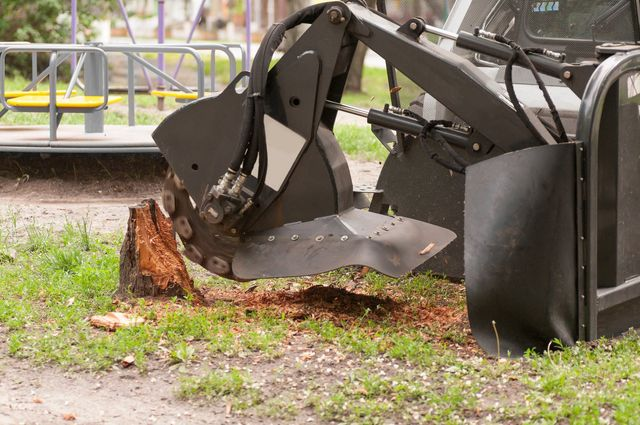 Will homeowners insurance pay to remove a hazardous tree ...