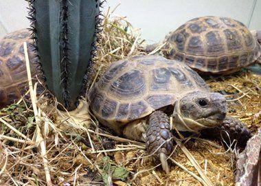 Tortoise
