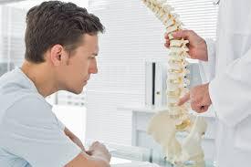 studio di una riproduzione della colonna vertebrale