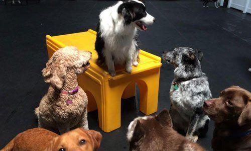 Dog Day Care San Leandro