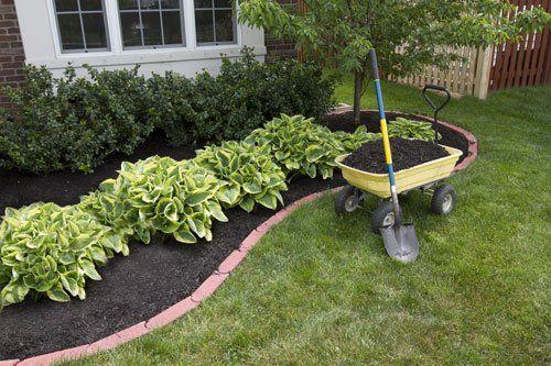 Un prato e sul lato destro un'aiuola con delle piante e accanto una carriola con della terra