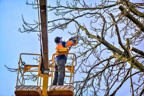 Un uomo su una piattaforma aerea mentre taglia un albero