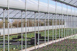 Large greenhouse in a nursery