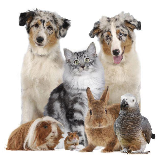 Hundehaftpflicht Tipps Für Den Versicherungsabschluss