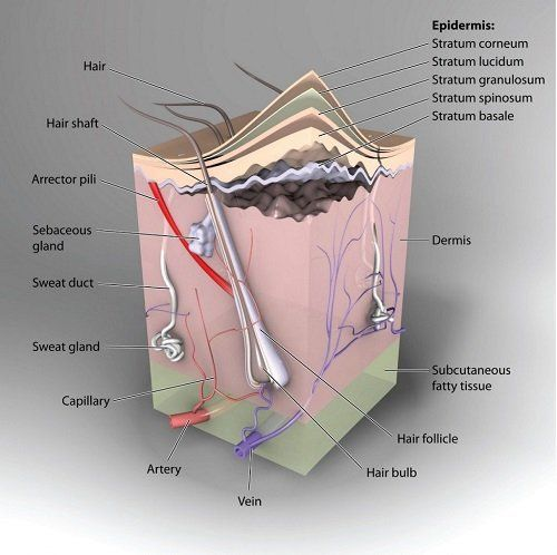Detailed drawing of technical elements of the skin.