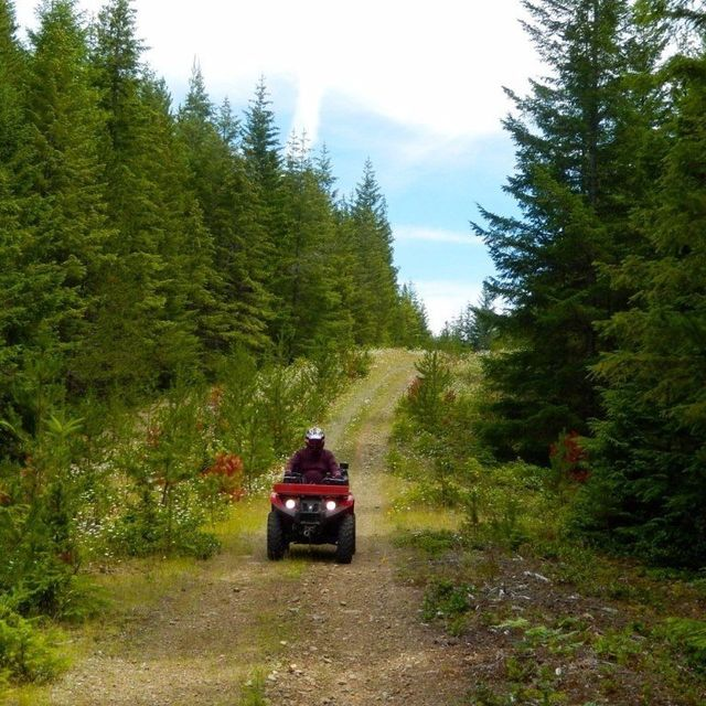 An all terrain vehicle driving through the forest