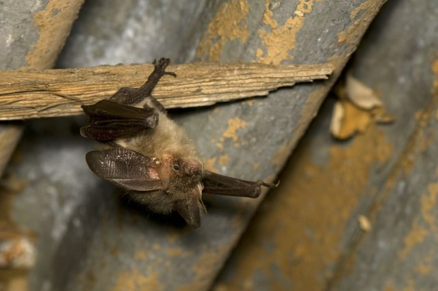 Bat in garage