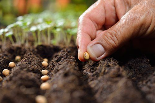 mano che pianta in terra delle sementi