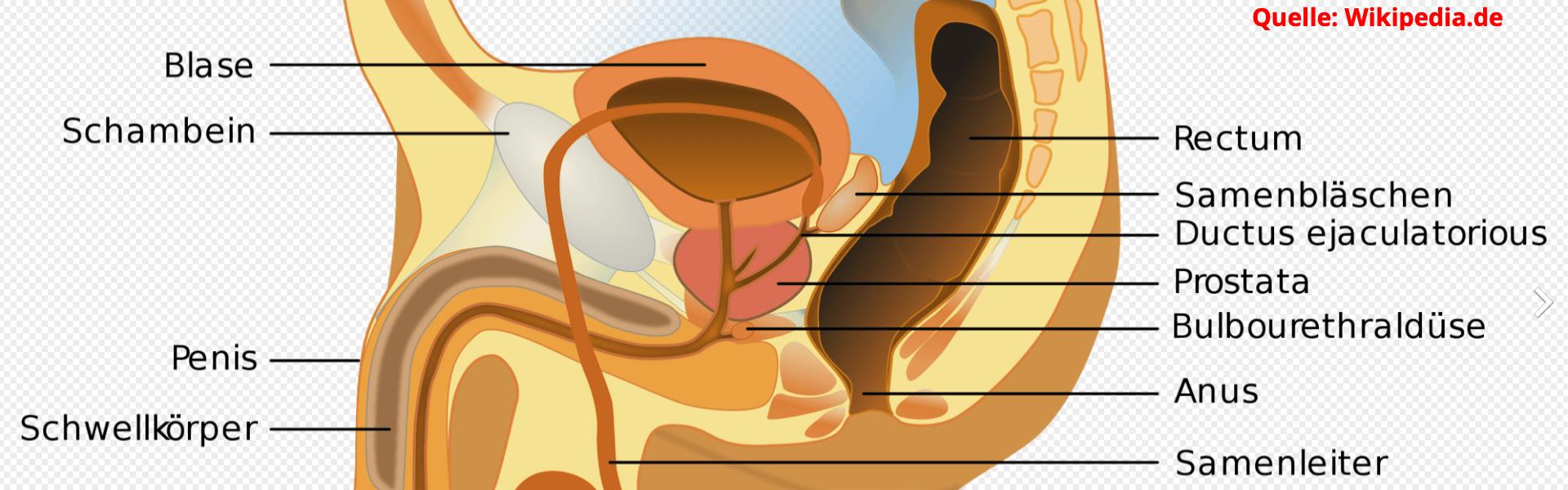 Außen prostata von Prostata Behandlung