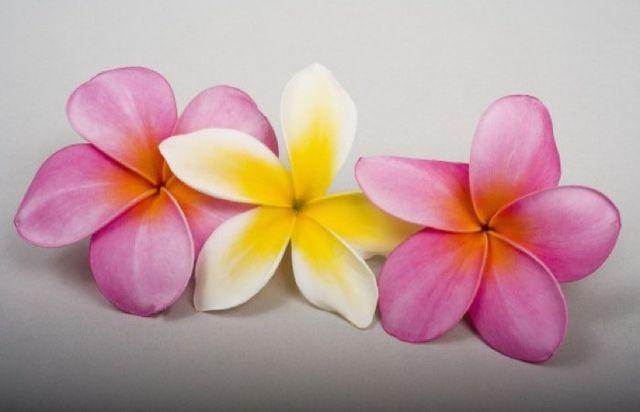 fiori per funerali, corone funebri, cuscini copricassa