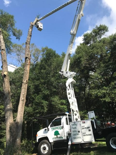 Man performing tree cutting services in Headland, AL