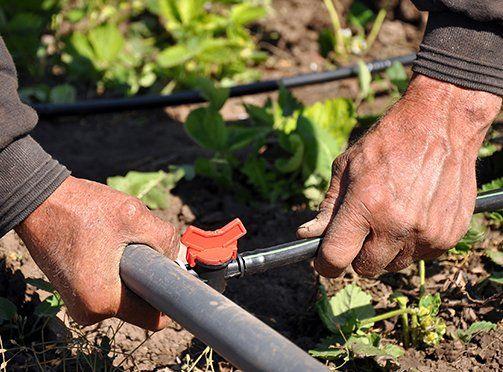 Irrigation system in garden in Waterford