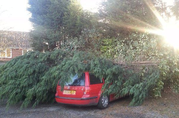 tree fallen on the car