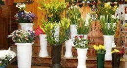 vasi bianchi con composizioni di fiori