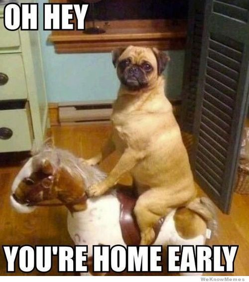 10 Funny Dog Memes for Your Friday