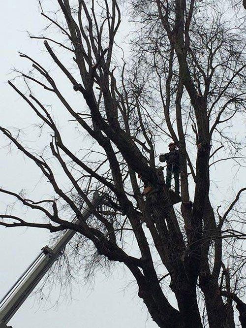 Un uomo  con un imbragatura mentre taglia rami di un albero