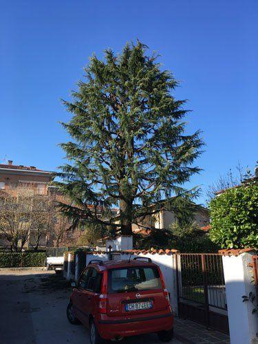 una Fiat Panda rossa parcheggiata fuori da una villa e di fronte un albero sfoltito