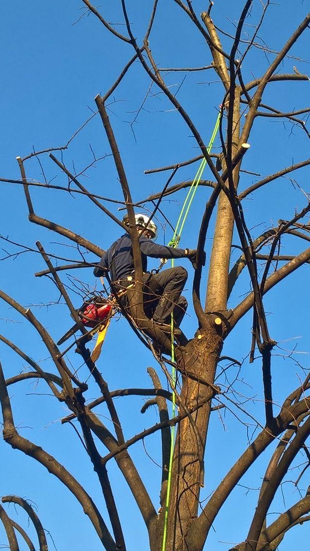 potatore che sale su un albero
