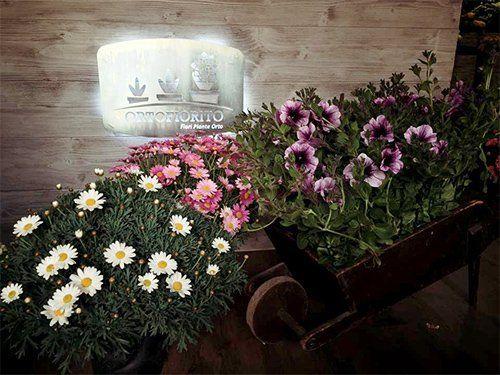Dettaglio di compozioni floreali all'interno di Ortofiorito