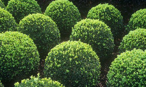 Spherical shrubs