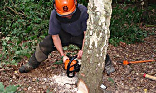Tree surgeon cutting down a tree