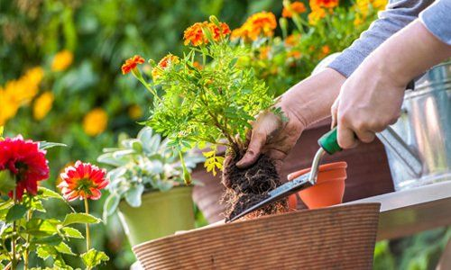 Garden maintenance services from the professionals in Ware