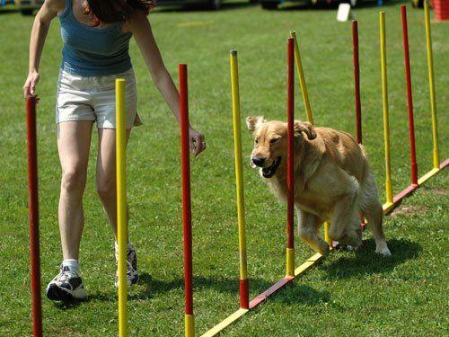 Pet Training Gainesville, FL