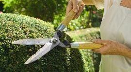 prodotti per piante, potatura siepi e alberi, cura del verde