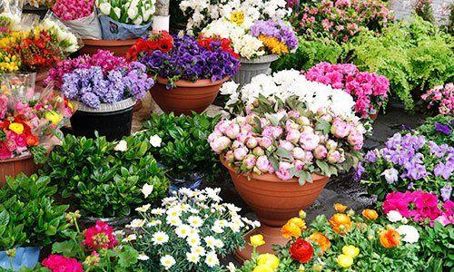 Fiori multicolori nei vasi