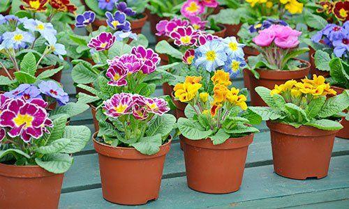 vasi con fiori di diversi colori