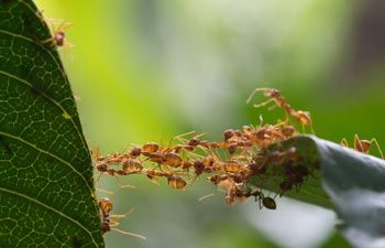 Ant Removal — Ants Going on a Leaf in Vienna, OH