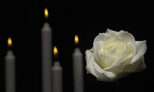 Rosa bianca, candele sfumate
