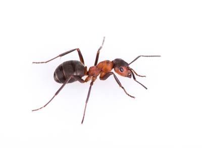 Pest Control San Antonio, TX