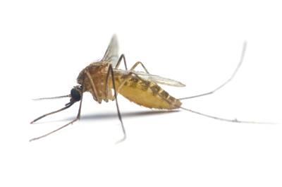 Bed Bugs San Antonio, TX